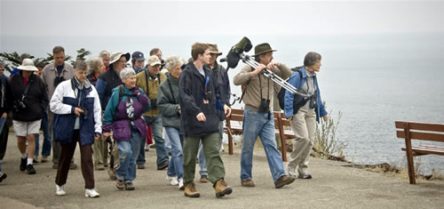 Harry Fuller leading a birding walk at Land's End, San Francisco. Photo by Godwin Woon